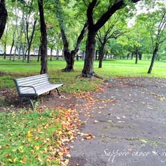 秋の一枚/公園/ベンチ/落葉/秋 秋の一枚。 誰もいない公園のベンチ。 そ…