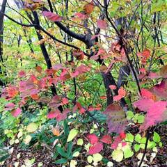 秋の一枚/登山/紅葉/景色/風景/秋 秋の一枚。 登山で見つけた秋の風景。 紅…