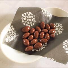 今日のデザート/チョコレート/ロイズ/ピスタチオ 今日のデザート。 チョコレート。  ピス…