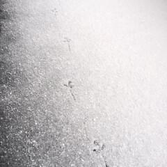 冬の1枚。/足跡/お客様/雪の日/冬 冬の1枚。 我が家のベランダに足跡発見!…