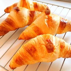 焼きたて/パン/クロワッサン/ピカール/冷凍/本場フランス 焼きたてのパンは すぐには食べられません…