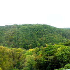 風景/北海道の秋/山あい/雨のドライブ 北海道の秋。 紅葉が始まっています。 雨…
