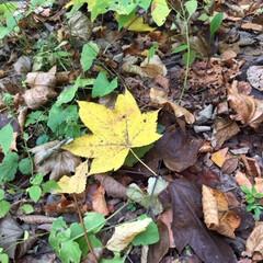 秋の一枚/風景/落葉/登山/山の紅葉/秋 秋の一枚をパチリ! 初登山で見つけた秋の…