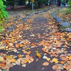 今日の散歩/紅葉/落葉/景色/キレイ 今日の散歩。 散策路に落ちた葉が 道を彩…
