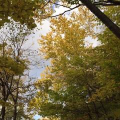 秋の一枚/紅葉/山の秋/秋 秋の一枚。 太陽が木の葉に当たってキラキ…