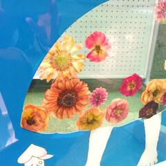 おでかけワンショット。/アート展/押し花/おでかけワンショット おでかけワンショット。 アート展に参加し…
