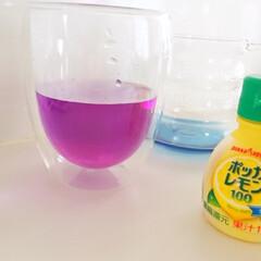 ハーブティ/バタフライピー/青いお茶/レモン/ピンクに変身 バタフライピーという 青いハーブティに …