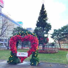 旅/景色/札幌/冬の旅/ホワイトイルミネーション 札幌の冬の風物詩。ホワイトイルミネーショ…