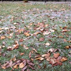 秋から冬へ/落葉/雪 秋から冬へ移行する季節ですね。 落葉に雪…