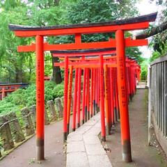 旅の景色。/乙女稲荷神社/鳥居/旅 旅の景色。 乙女稲荷神社の鳥居が見事です…