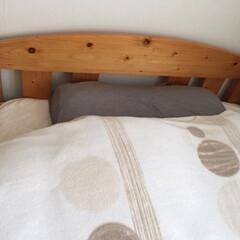 冬の一枚/寝具/毛布/羽布団の上に毛布/冬 冬の寝具は暖かさ優先で。 羽根布団の上に…