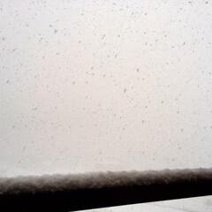 冬の1枚。/雪/下から降ってくる/冬 冬の1枚。 外は真っ白。 マンションの雪…