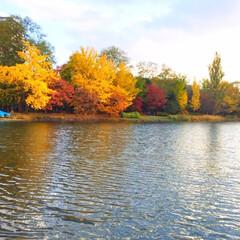今日のお散歩/中島公園/紅葉/水面 今日のお散歩。 湖に映る紅葉もキレイです…