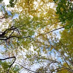秋の一枚。/景色/風景/秋の登山/森林浴/秋 秋の一枚。 山登り中は足元を見がちですが…