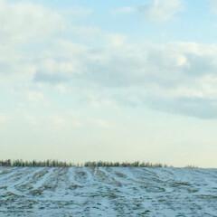 冬の一枚/北海道/自然を満喫/雪景色/防風林/冬 冬の一枚。 北海道の自然を満喫。 雪景色…