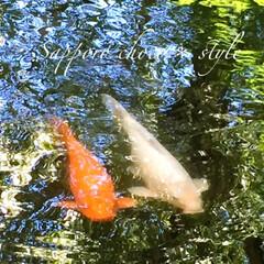 旅の一枚/北海道庁/池/鯉/紅白でめでたい/旅 旅の一枚。 北海道庁の庭には池があり、鯉…
