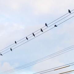 風景/空/鳥の群れ/音符 空を見上げたら、電線に鳥の群れ。 まるで…