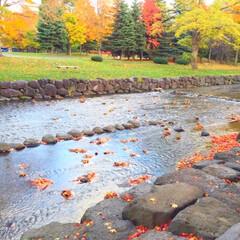 今日のお散歩/公園/小川/落葉/至福の時 今日のお散歩。 公園の中を流れる小川。 …