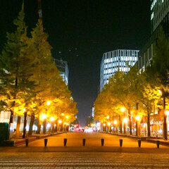 夜/散歩/ライトアップ/イチョウ並木/幻想的 夜の散歩。 仕事帰りに見るイチョウ並木。…