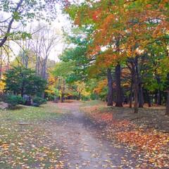 今日のお散歩/公園/道/物語/秋/風景 今日のお散歩。 公園の中。 この先を行っ…