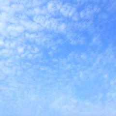 今日の空/うろこ雲/秋の空/景色 今日の空。 うろこ雲が見えました。 秋の…