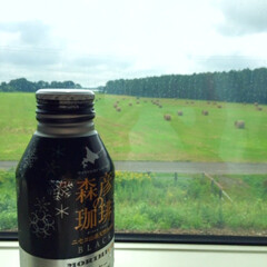JR北海道/缶コーヒー/札幌/カフェ/森彦/美味しい 旅のお供に。 IR北海道のキオスクで販売…