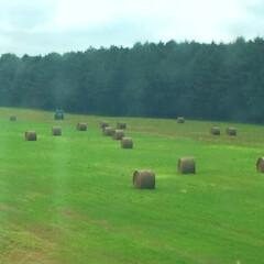 JRの車窓/景色/風景/畑/牧草ルール/夏の風物詩/... JRの車窓からの眺め。 十勝の平野に現れ…