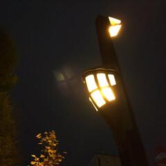 夜の風景/街灯/夜道/灯り/嬉しい 夜の風景。 街灯が導いてくれます。 暗い…