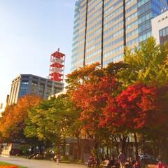 散策/札幌/大通公園/紅葉/秋/冬 札幌を散策。 大通公園は、すでに紅葉がキ…