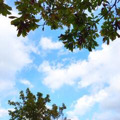 秋の一枚/景色/風景/秋の空/秋 秋の一枚。 秋の空は夏と違う青さです。 …