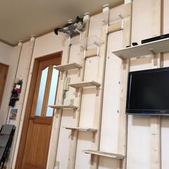 壁かけテレビとキャットステップ/DIY収納 (5枚目)