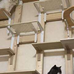 壁かけテレビとキャットステップ/DIY収納 (8枚目)