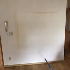 壁かけテレビとキャットステップ/DIY収納