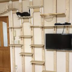 壁かけテレビとキャットステップ/DIY収納 (6枚目)