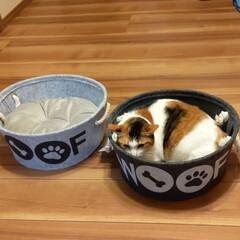 ペット雑貨/ダイソー/100均 DAISOで即買いした猫用(犬用)ベッド…