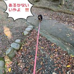 公園で集めた木ノ実/犬/散歩/公園/フリマ/千日紅/... おはようございます😃  久しぶりのオーバ…(2枚目)