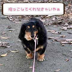 公園で集めた木ノ実/犬/散歩/公園/フリマ/千日紅/... おはようございます😃  久しぶりのオーバ…(3枚目)