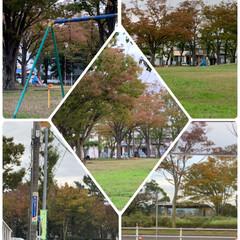 イチョウ並木/紅葉🍁/秋の風景/暮らし おはようございます☀  平地でも少しずつ…