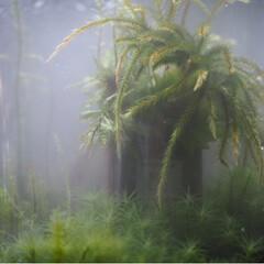アクアリウム/テラリウム/霧/リミアの冬暮らし 濃霧の中で(5枚目)