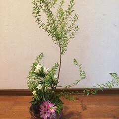 季節の移り変わり/花のある暮らし/小さな幸せ/ハンドメイド/住まい/暮らし
