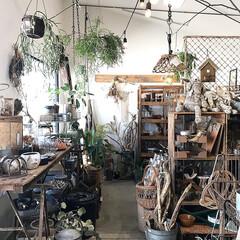 ヴィンテージ/アンティーク/観葉植物のある暮らし/観葉植物インテリア/グリーン/雑貨屋さん/... 大阪の和泉市にあるグリーンとヴィンテージ…