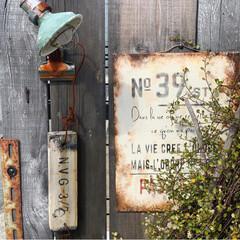 花のある暮らし/グリーンのある暮らし/ワイヤープランツ/門柱前/門柱/gardener/... 門柱前のワイヤープランツにかわいいお花が…