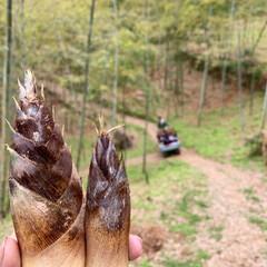 子供と一緒に/お出かけ/竹林/竹の子掘り/竹の子/GW/... GWに竹の子掘りに行ってきました♬ 竹が…