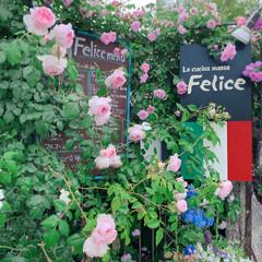 ローズガーデン/ナチュラルガーデニング/お花屋さん/花屋/庭のある暮らし/バラ お花屋さんとイタリアンレストランが併設さ…