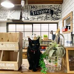 キッチンDIY/猫/ニャンちゃん/春のフォト投稿キャンペーン/にゃんこ同好会/キッチン雑貨/... お友達のRieちゃんちのDIYで作ったキ…