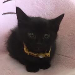 にゃんこ同好会/なつかしい 黒猫の黒愛(クレア)♡ MIX犬の心逢(…