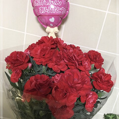 サプライズプレゼント/赤いカーネーション意味・母への愛♡.../赤いカーネーション/母の日プレゼント/朱色/暮らし/... 母の日、子供達からのサプライズプレゼント♡
