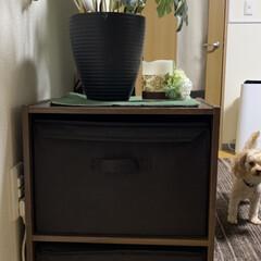 ラベリング収納/フタが立つ容器/犬猫/ニャンコ/ワンコ/タッパー収納/... 我が家のワンコ君とニャンコ君達のごはん・…(3枚目)