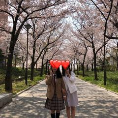 桜/新生活 今日は娘の学校へ。 出発前に桜並木で写真…