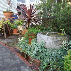 ガーデニング 夕方の庭🎵 じっとしていると蚊にすぐ刺さ…